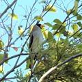 お城で出会った鳥たち-7