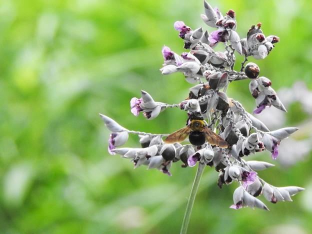 ミズカンナにクマバチ