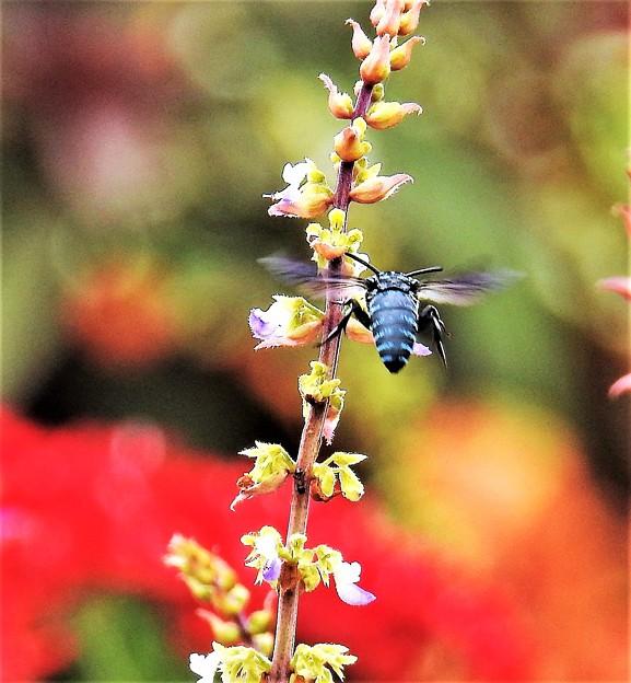 幸せを呼ぶ青い蜂-5