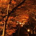 Photos: 秋、情熱
