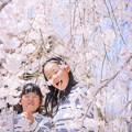 写真: 桜のシャワー