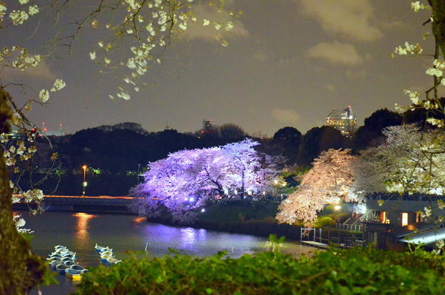 Photos: 妖艶な夜桜