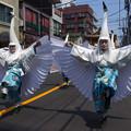 写真: 白鷺の舞