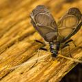 写真: 鈴虫
