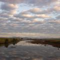 写真: 朝の河