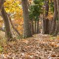 写真: クヌギの道