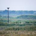 Photos: コウノトリの巣が見える