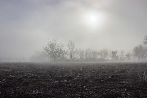 Photos: 霧の中