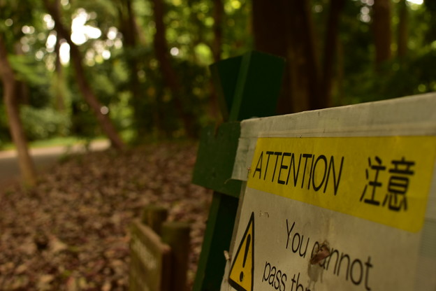 Photos: ATTENTION