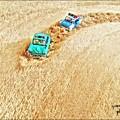 Photos: 大麦畑でつかまえて