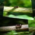 蟻流しコラージュ