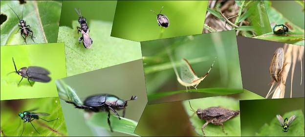 写真: 庭の小さな虫