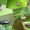 庭の小さな虫