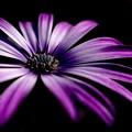 写真: 紫のはな