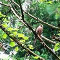 写真: サシバの林
