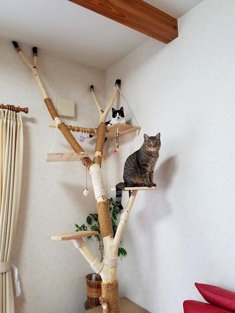 ネムノキ登り木1号