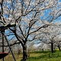 桜とボーグ