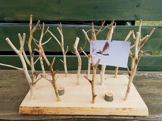 雑木林作ってみた