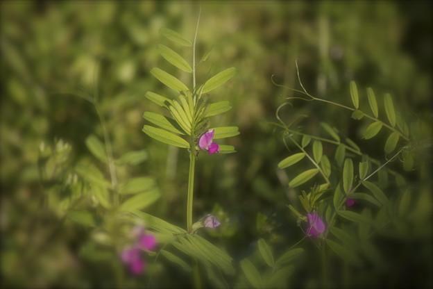 野に咲く花2