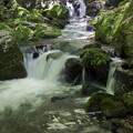 写真: 新緑の流れ