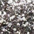 Photos: 夢の春