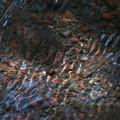 写真: 水紋-02