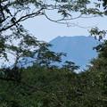 林間からの富士山