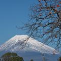 写真: 雪化粧の富士山-02