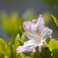 春を唄う-01