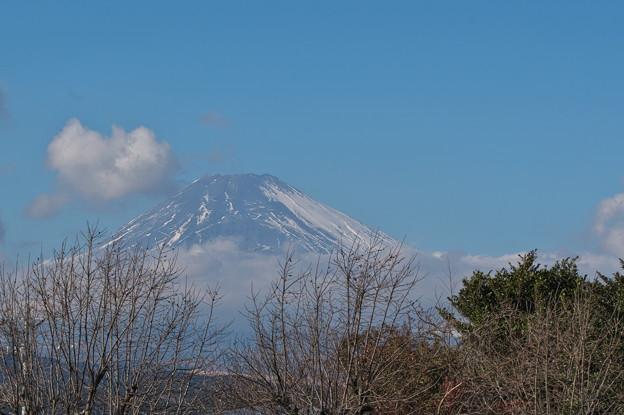 新雪の積らない富士山