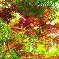 新緑_杉村公園08