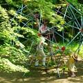 新緑_杉村公園05