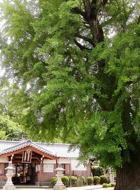 写真: 丹生酒殿神社03