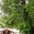 丹生酒殿神社03