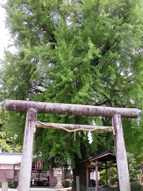 写真: 丹生酒殿神社02