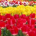 競演:春爛漫11