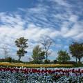 写真: 最後の輝き:春爛漫08