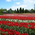 写真: 彩りの絨毯:春爛漫16