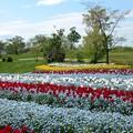 写真: 春爛漫09
