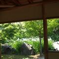 写真: 青苔亭:菖蒲園01