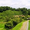 写真: 懐かしい風景:棚田16