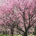 写真: 春めいて
