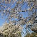 写真: 古寺の春