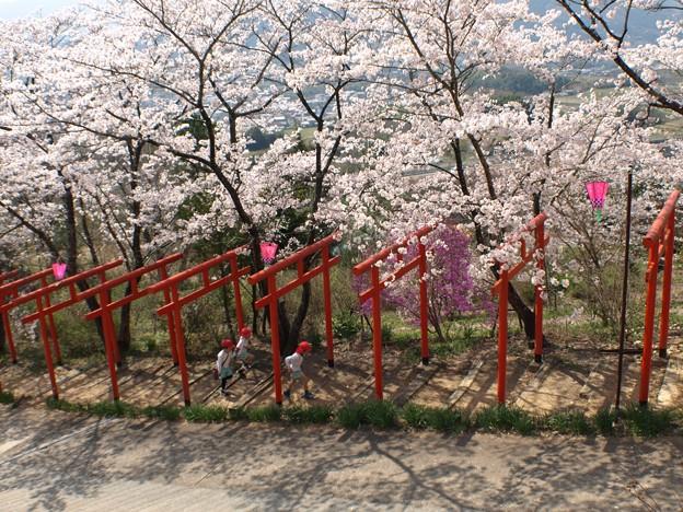 小さな遠足:丸高神社桜05