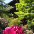 写真: 風格:牡丹01