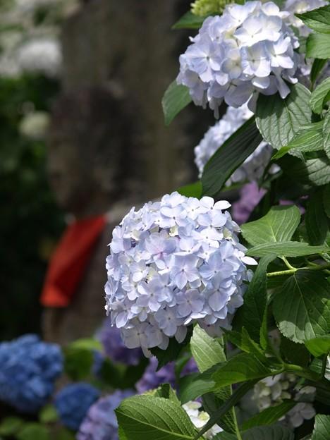 お地蔵様:矢田寺紫陽花36