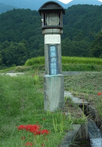 番水の時計:曼珠沙華49