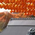 写真: 串柿の里01