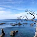 写真: 青海島04 変装行列