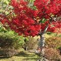 写真: 紅葉を愛でる鷺:晩秋万博公園19